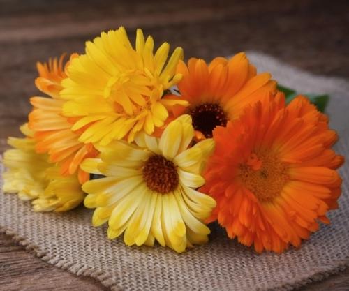 Goudsbloemen - Calendula officinalis - Eetbare Bloemetjes