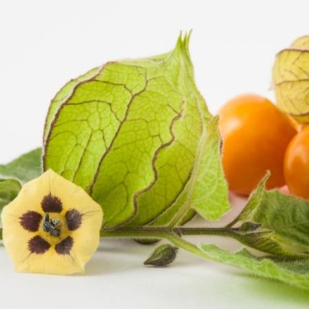 Kleine Ananaskers - Physalis pruinosa - Eetbare Bloemetjes